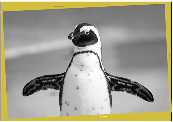 Apadrina un pingüino